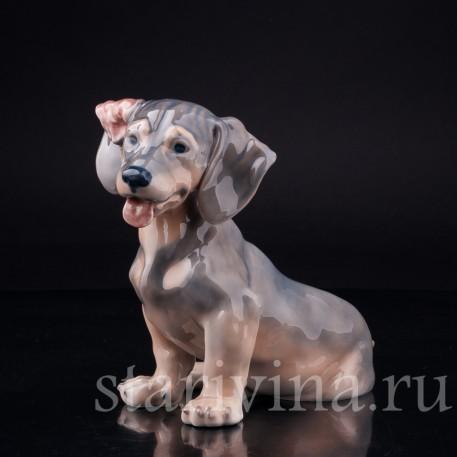 Фигурка собаки из фарфора Такса с завернутым ухом, Royal Copenhagen, Дания, вт. пол. 20 в.